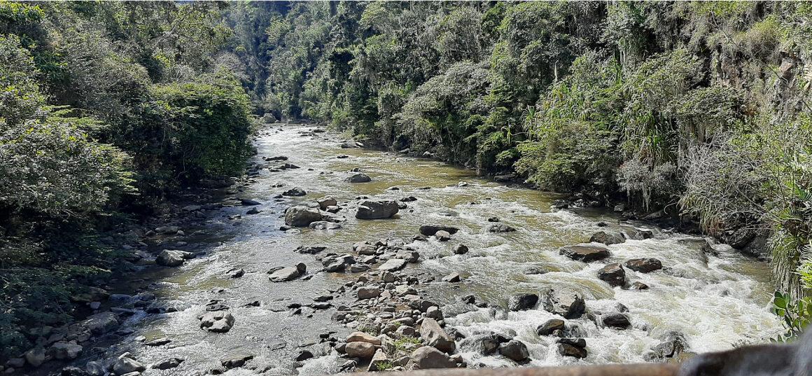 fotografia de un bosque con un rio