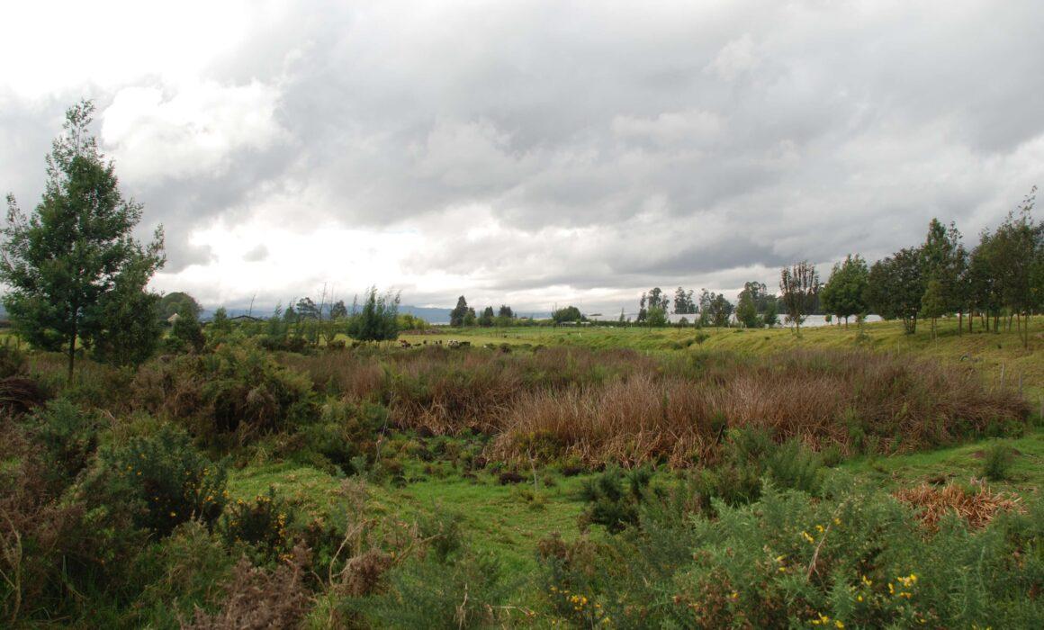 Parque Ecológico Distrital de Humedal del Distrito Capital